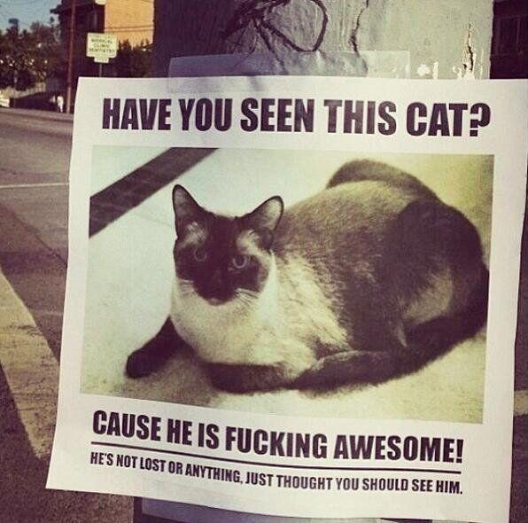 Habt Ihr diese Katze gesehen?